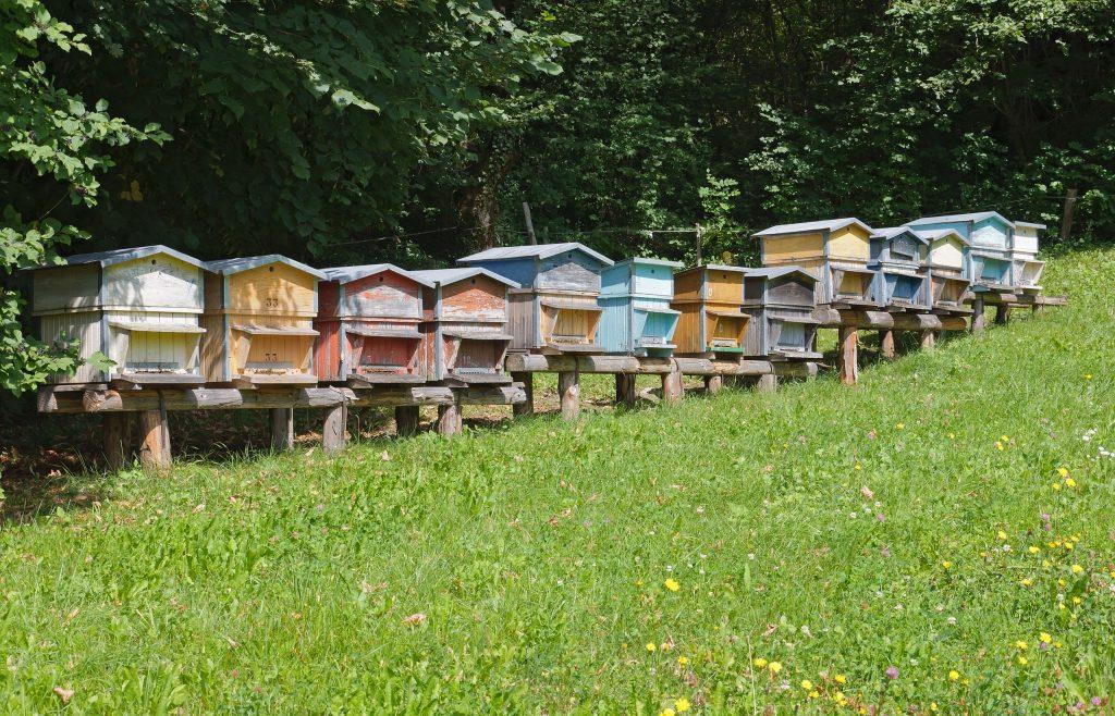 Ruches pour récolter le miel en apiculture.