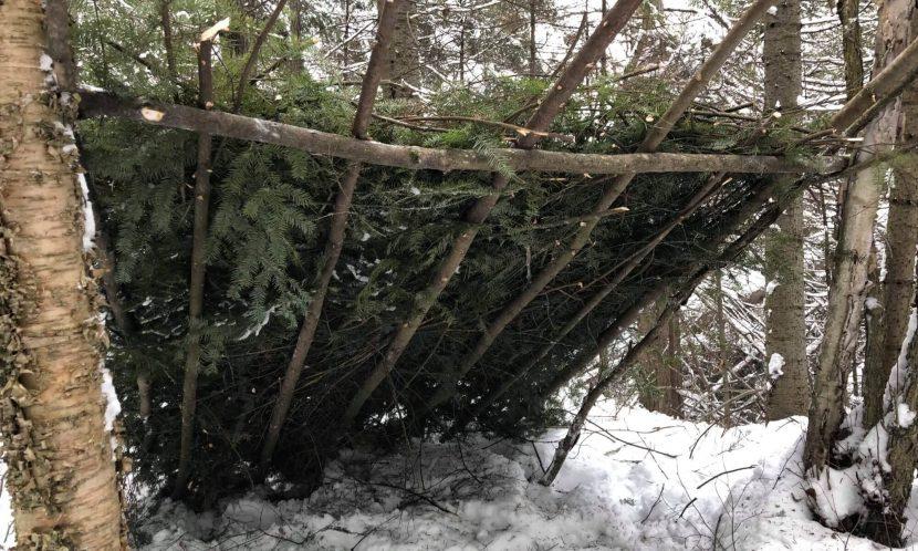 Image d'un abri construit dans une forêt