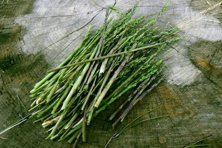 L'asperge sauvage : plante sauvage comestible