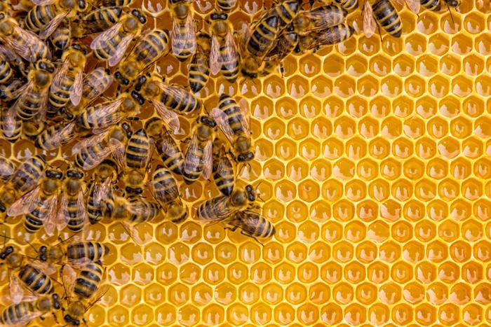 Les principes de l'apiculture
