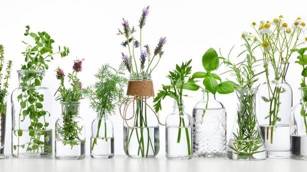 Des plantes bonnes pour l'organisme, aux vertus médicinales