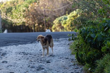photo d'un chien errants dans une rue déserte entourée d'un peu de végétation